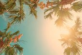 Palm Tree Crowns With Green Leaves On Sunny Sky Background. Coco Palm Tree Tops - View From The Grou poster