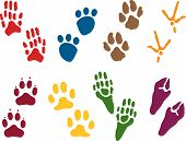 image of hoof prints  - Eight sets of Animal Tracks in different colors - JPG