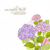 foto of hydrangea  - card with stylized hydrangeas and text - JPG