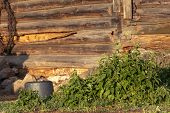 Stinging Nettle With Green Leaves On Brown Wooden Log Wall Background With Bokeh Effect At Sunrise poster