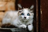 Homeless Grimy Little White Kitten Portrait. A Beautiful Cat With Blue Eyes. Animals Are Homeless. S poster