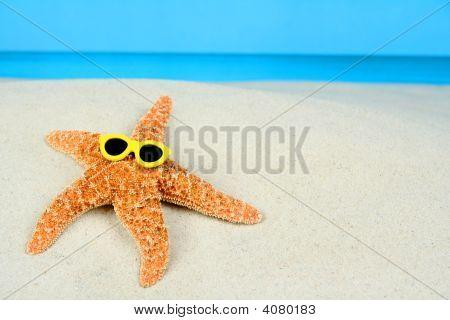 Sunbathing Starfish