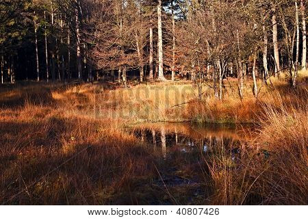 Wet Swamp In The Autumn Forest
