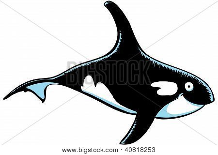 Cartoon Orca