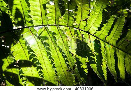Green Leaves In Morning Light