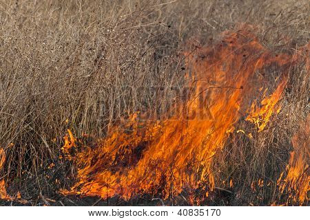 Fire In A Field
