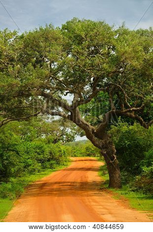 Road In The Jungle
