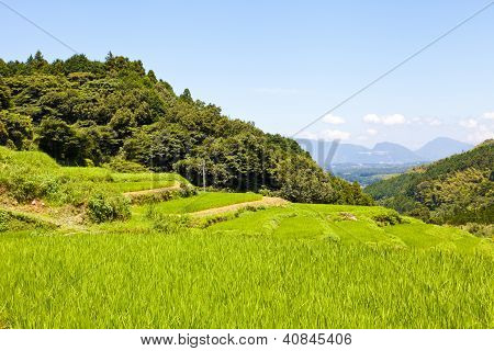 Rice Terraces Of The Mountain