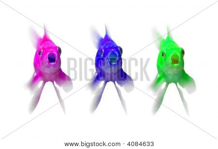 Contemporary Goldfishes (Purple, Bule And Green)