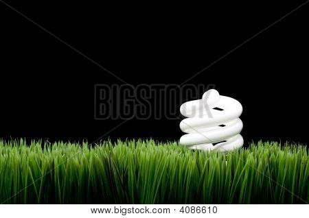 Compact Fluorescent Light Bulb On Grass