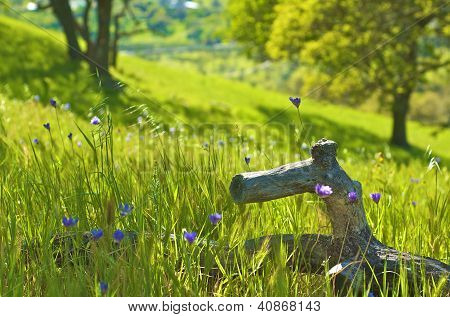 Fallen tree branch rests in a grassy field of flowers