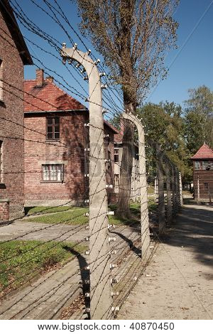 View Down The Barbed Wire Fence, Auschwitz