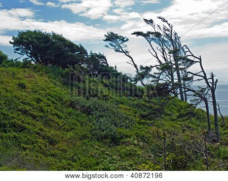 Windswept Trees On A Hillside On A Clear Sunny Day