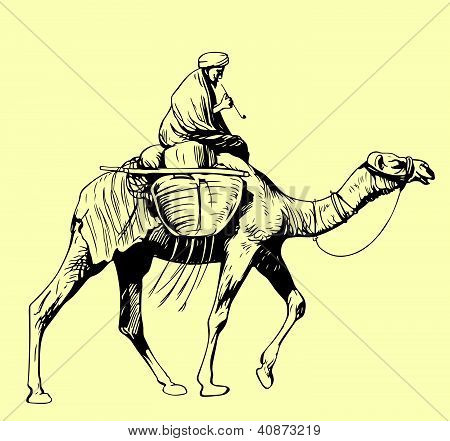Montar un camello del beduino