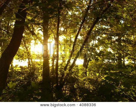 Rays Of A Sun Are In The Dark Forest