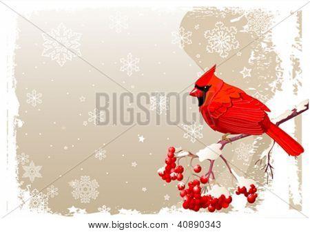 Red Cardinal Vogel sitzt auf Eberesche branch