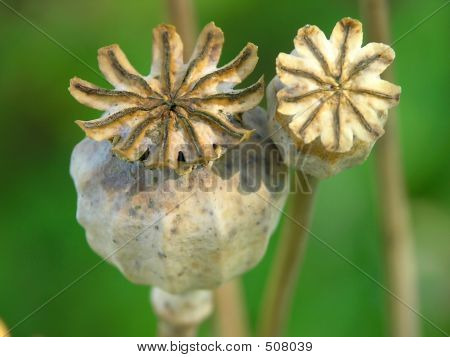 Poppy-heads