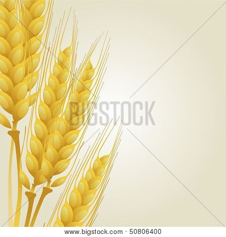 Wheat on light background