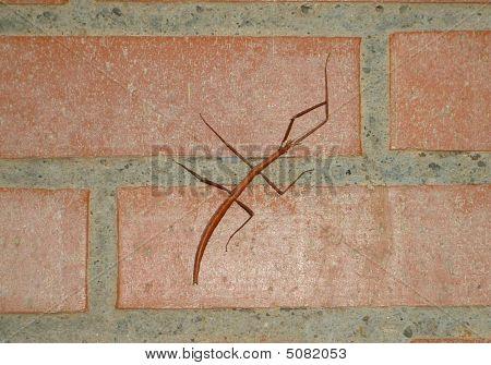 Stick-bug