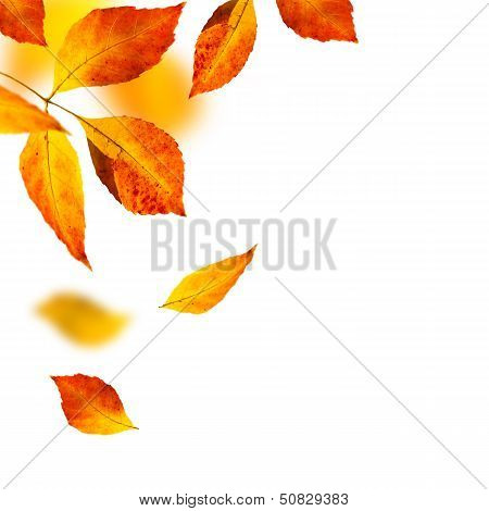 Autumn Leafs On White Background
