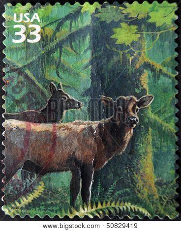 UNITED STATES OF AMERICA - CIRCA 2000: A stamp printed in USA shows caribou circa 2000