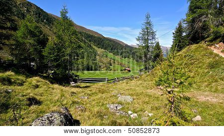 Fresh Green Grass In Alpine Meadow Surrounded By Forests And High Mountains.