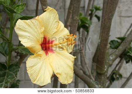 Yellow Flower on a Tree
