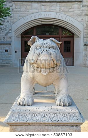 Bulldog Statue At The Atherton Union Building On The Butler University Campus