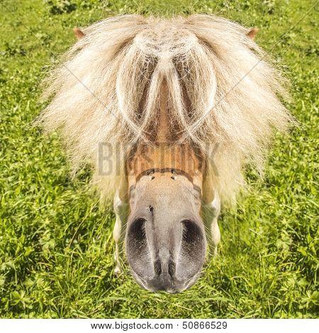 Funny Pocket Horse