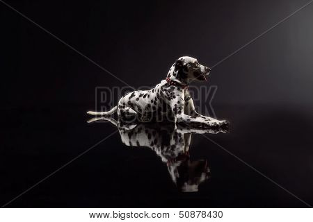 Dalmata On Black Background