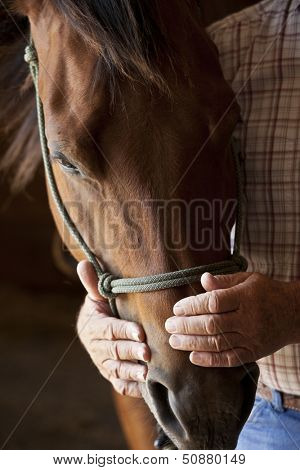 kind farmers hands holding horses head