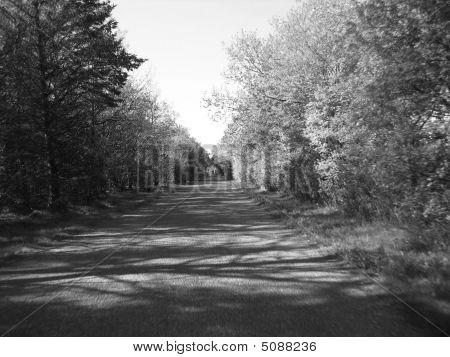 Road Down A Wood