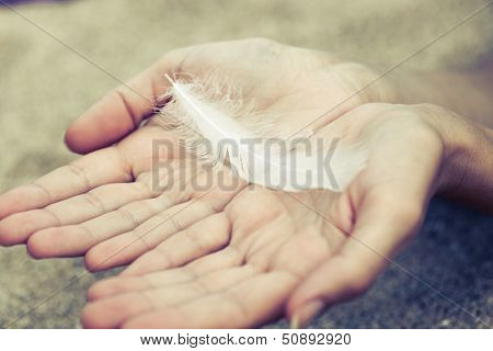 a feather in hands