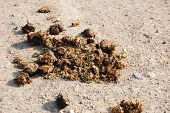 pic of crappie  - crap or from a horse on a agriculture farm - JPG