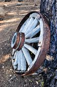 stock photo of covered wagon  - Old wheel from a covered wagon leans agains a pine tree - JPG
