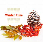 stock photo of conifers  - A twig of mountain ash and cone on snow background - JPG