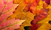 stock photo of photosynthesis  - Autumn leaves background - JPG