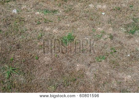 Steppe With A Little Grass Top View