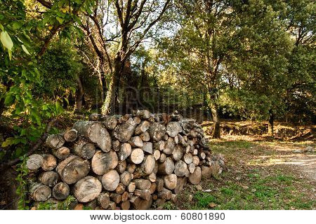 Timber Supply