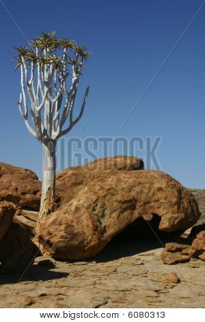 Tree in Namib desert