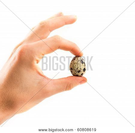 Quail Eggs In Hand Isolated On White