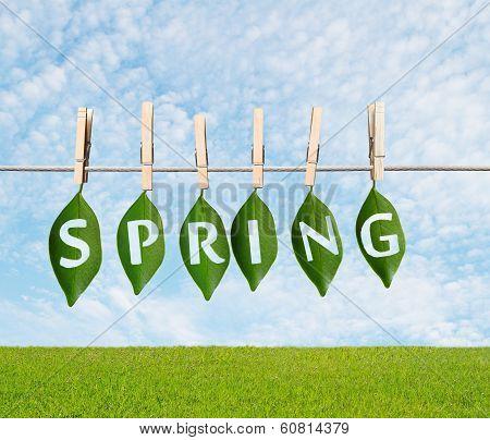 Spring Concept
