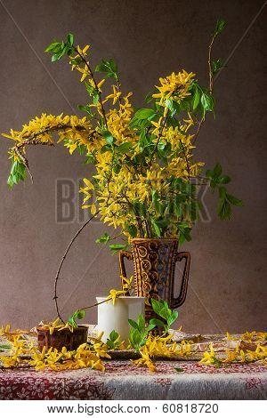 Still Life Sprigs Flowering Forsythia