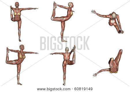 Dancer yoga pose for woman with muscle visible