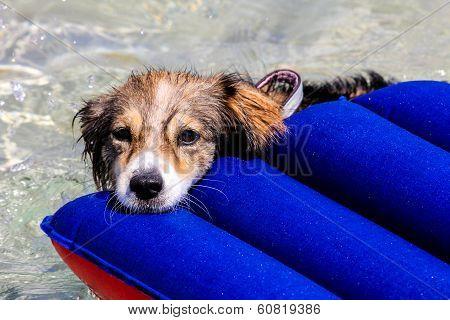 Dog On An Air Mattress