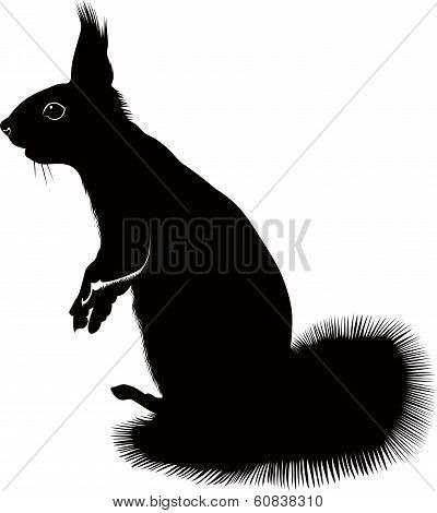 animal squirrel