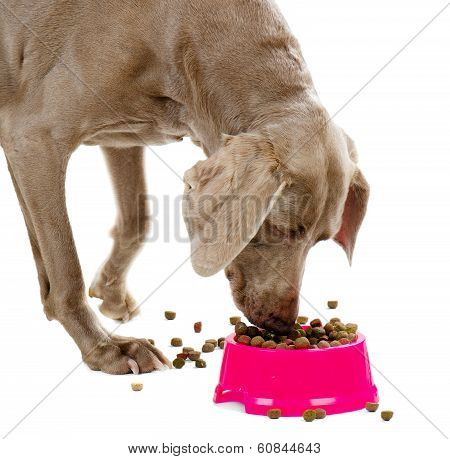 Dog Isolated On White