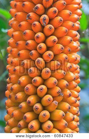 Flora In Thailand