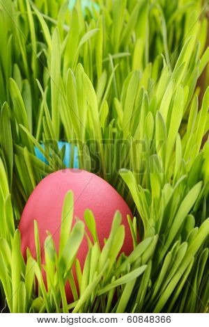 Easter Eggs Hiden In Grass