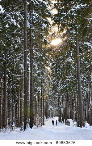 Winter walking in the forest